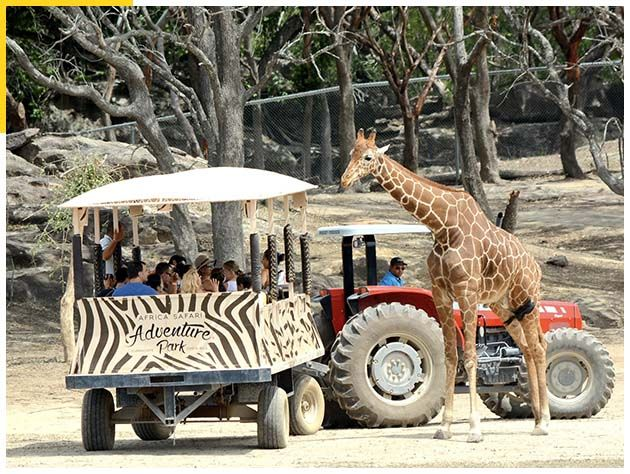 Africa Safari Adventure Park
